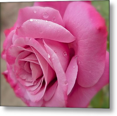 Daddy's Rose Metal Print by Gwyn Newcombe