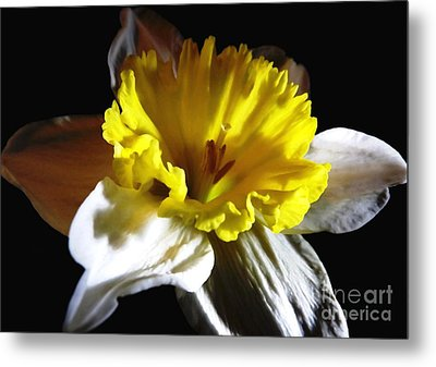 Metal Print featuring the photograph Daffodil 2 by Rose Santuci-Sofranko