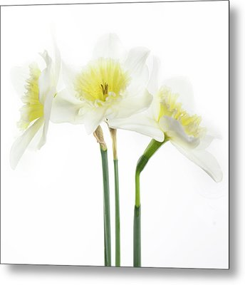 Metal Print featuring the photograph Dafs by Rebecca Cozart