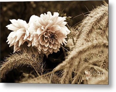 Dahlia After A Shower Metal Print by Marcia Lee Jones