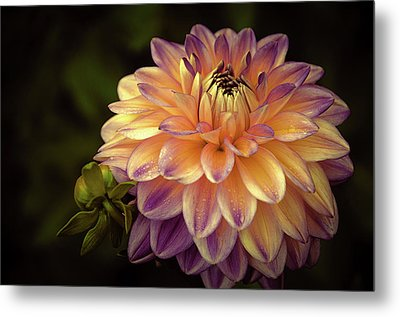 Metal Print featuring the photograph Dahlia In Peach And Lavender by Julie Palencia