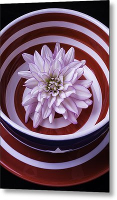 Dahlia In Red And White Bowl Metal Print by Garry Gay