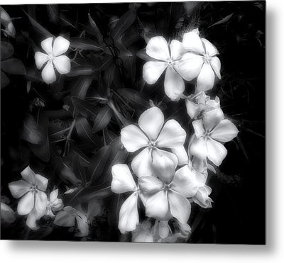 Dainty Blooms - Black And White Photograph Metal Print by Ann Powell