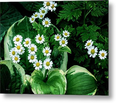 Daisies And Hosta In Colour Metal Print