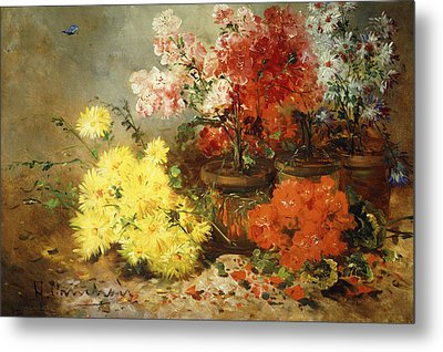 Daisies, Begonia, And Other Flowers In Pots Metal Print