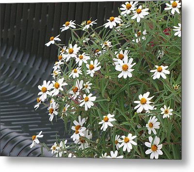 Daisies By The Bench Metal Print by Sylvia Wanty