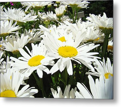 Daisies Floral Landscape Art Prints Daisy Flowers Baslee Troutman Metal Print by Baslee Troutman