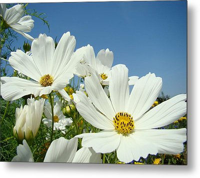Daisies Flowers Art Prints White Daisy Flower Gardens Metal Print by Baslee Troutman