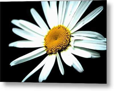 Metal Print featuring the photograph Daisy Flower - White Sun by Alexander Senin