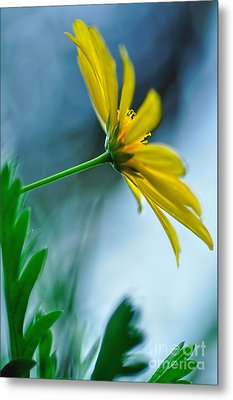 Daisy In The Breeze Metal Print by Kaye Menner