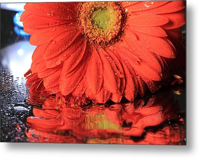 Daisy Reflections Metal Print by Angela Murdock