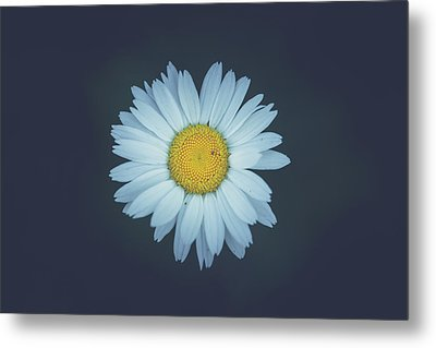 Metal Print featuring the photograph Daisy  by Shane Holsclaw