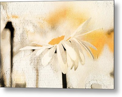 Daisyday - 56at01 Metal Print by Variance Collections