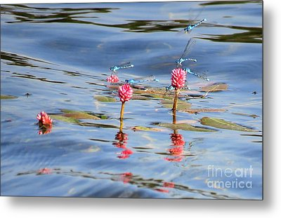 Damselflies On Smartweed Metal Print
