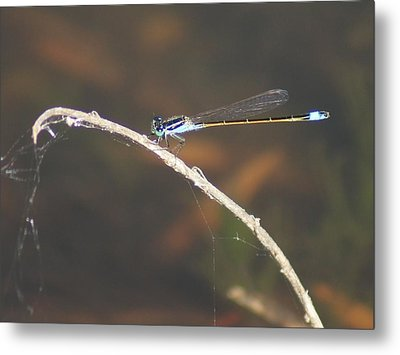 Metal Print featuring the photograph Damselfly by Lynda Dawson-Youngclaus