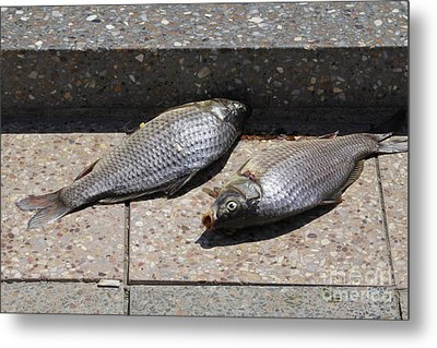 Metal Print featuring the photograph Dance Of The Dead Fish by Stephen Mitchell