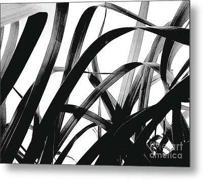 Metal Print featuring the photograph Dancing Bamboo Black And White by Rebecca Harman