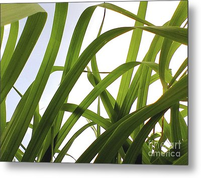 Metal Print featuring the photograph Dancing Bamboo by Rebecca Harman