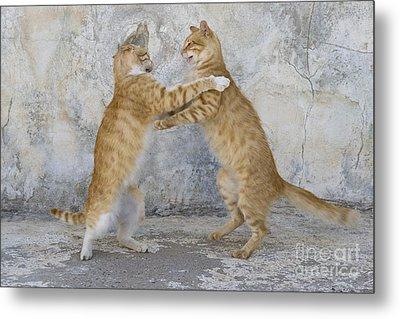 Dancing Cats Metal Print by Jean-Louis Klein aqnd Marie-Luce Hubert