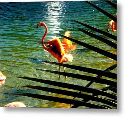 Dancing Flamingo Metal Print