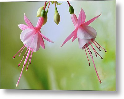 Metal Print featuring the photograph Dancing Fuchsia by Terence Davis
