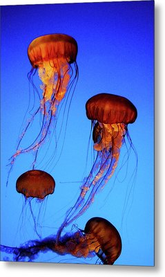 Metal Print featuring the photograph Dancing Jellyfish by Anthony Jones