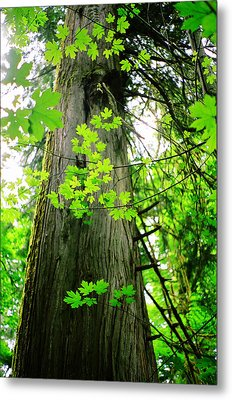 Metal Print featuring the photograph Dancing Leaves by Kathy Bassett
