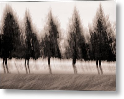 Dancing Pines Metal Print by Carol Leigh