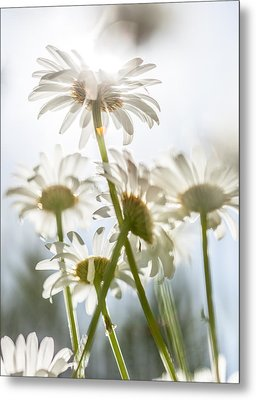 Metal Print featuring the photograph Dancing With Daisies by Aaron Aldrich
