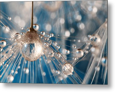 Dandelion Blue Sparkling Drops Metal Print by Sharon Johnstone