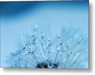 Dandelion Bouquet Metal Print