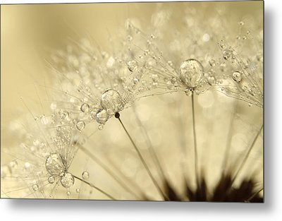 Dandelion Drops Metal Print by Sharon Johnstone