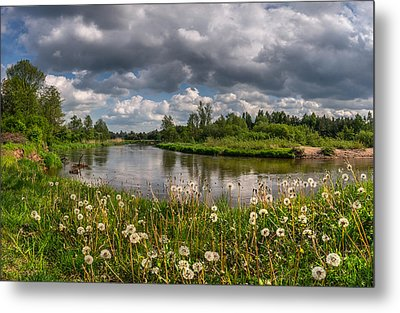 Dandelion Field On The River Bank Metal Print