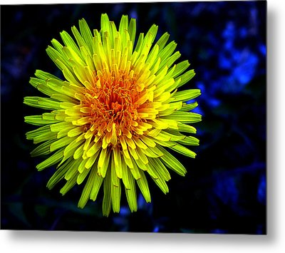 Dandelion Metal Print by Robert Knight