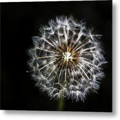Metal Print featuring the photograph Dandelion Seed by Darcy Michaelchuk