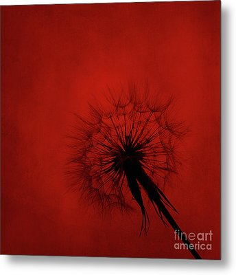 Dandelion Silhouette On Red Textured Background Metal Print