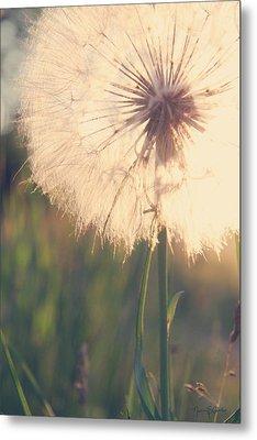Dandelion Sunshine Metal Print