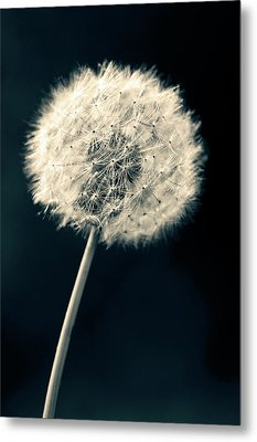 Metal Print featuring the photograph Dandelion by Ulrich Schade