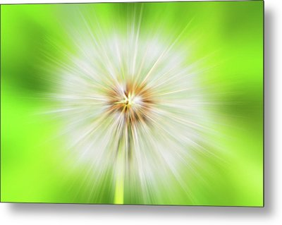 Dandelion Warp Metal Print by David Stasiak