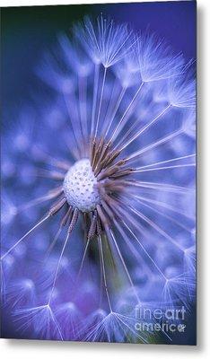 Dandelion Wish Metal Print by Alana Ranney