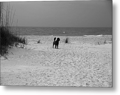 Metal Print featuring the photograph Dandy On The Beach by Michiale Schneider