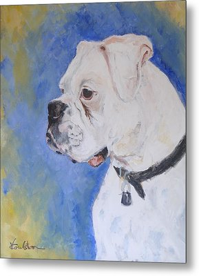 Danger The White Boxer Metal Print by Veronica Coulston