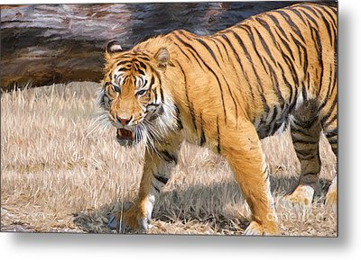 Dangerous And Endangered Metal Print by Judy Kay