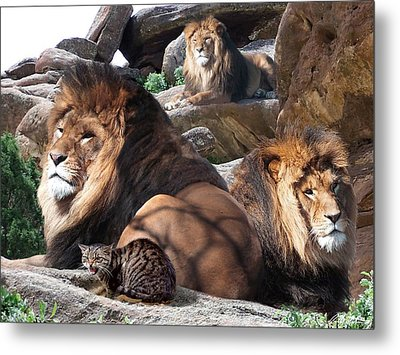 Daniel In The Lion Metal Print by Bill Stephens