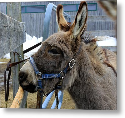 Daniel The Donkey Metal Print