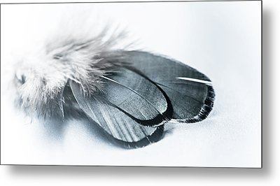 Dare To Fly Metal Print by Maggie Terlecki