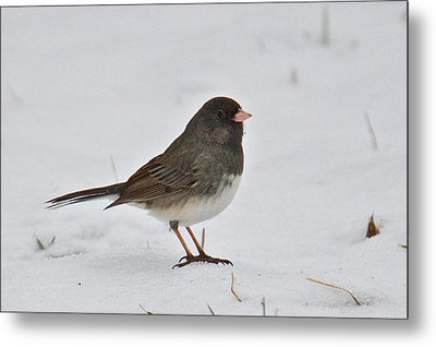 Metal Print featuring the photograph Dark-eyed Junco 1217 by Michael Peychich