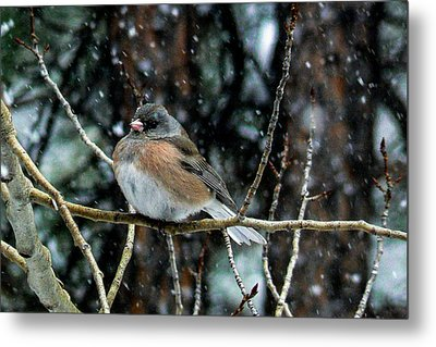 Dark-eyed Junco During A Snowfall Metal Print