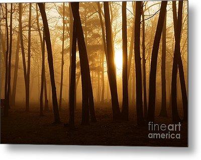 Dark Forest Metal Print by Terri Gostola