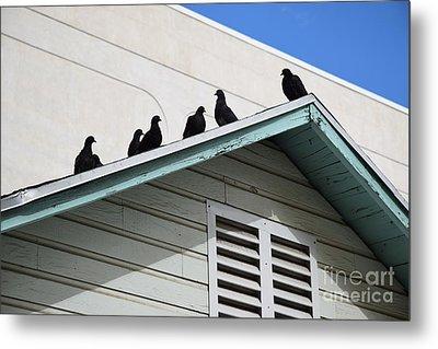 Dark Pigeons Metal Print